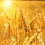 branza rolno spozywcza